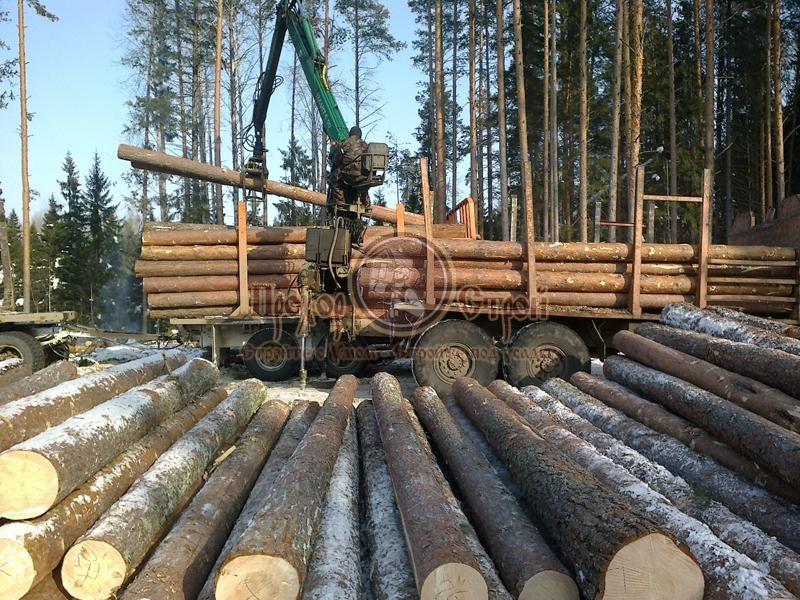 Заготовка леса спецтехникой